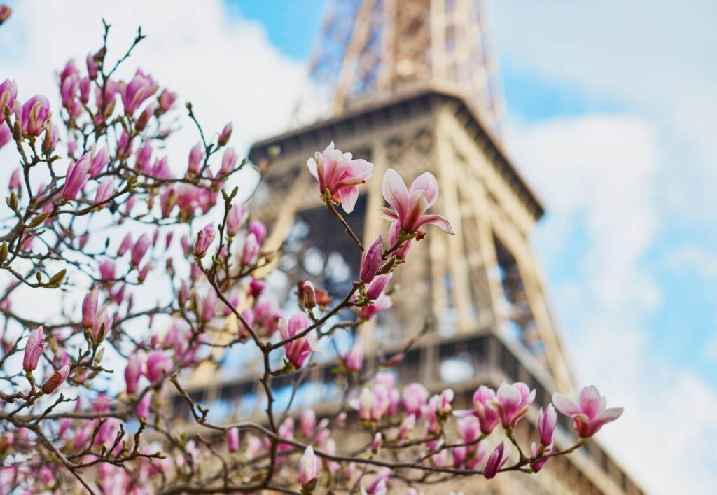 where to find cherry blossom in paris