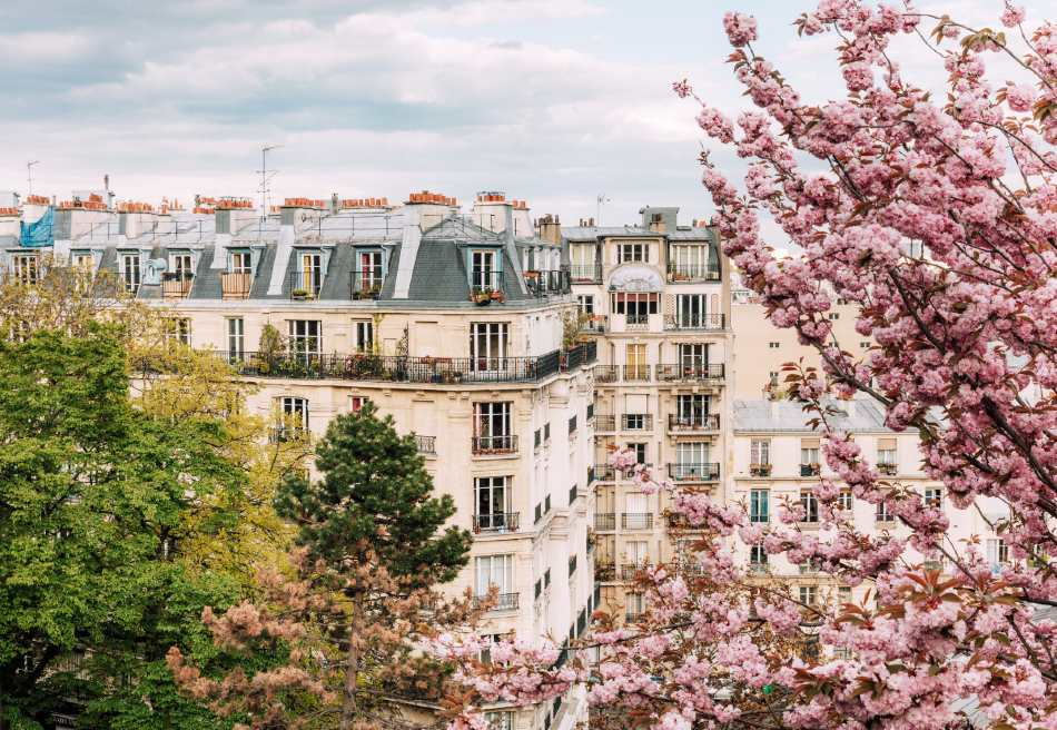 cherry blossom season in paris