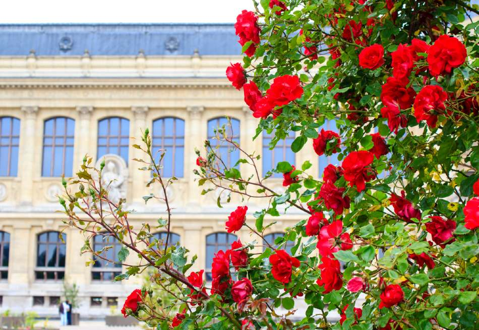 spring flowers in paris