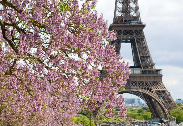 Spring in Paris: The Ultimate Guide to Visiting Paris in Spring